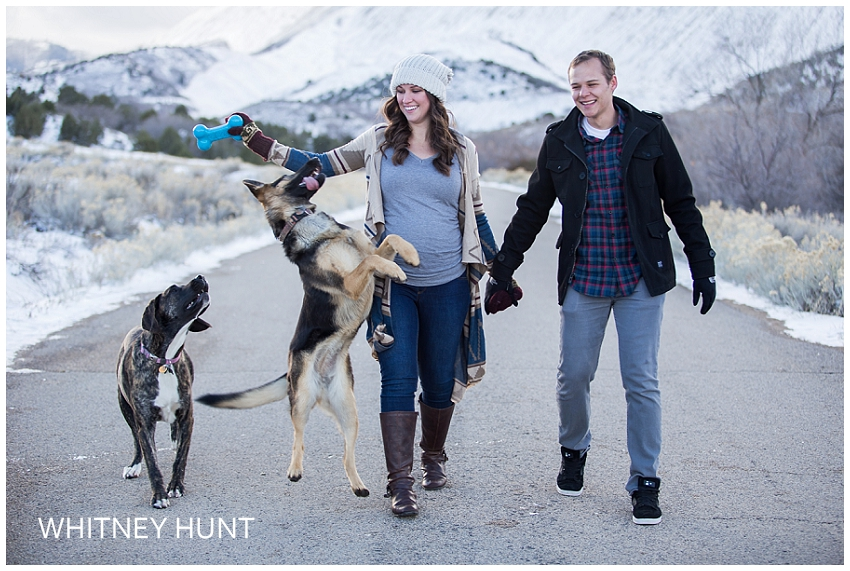 Wild Pups and a Pregnant Belly | Christmas Mini Session