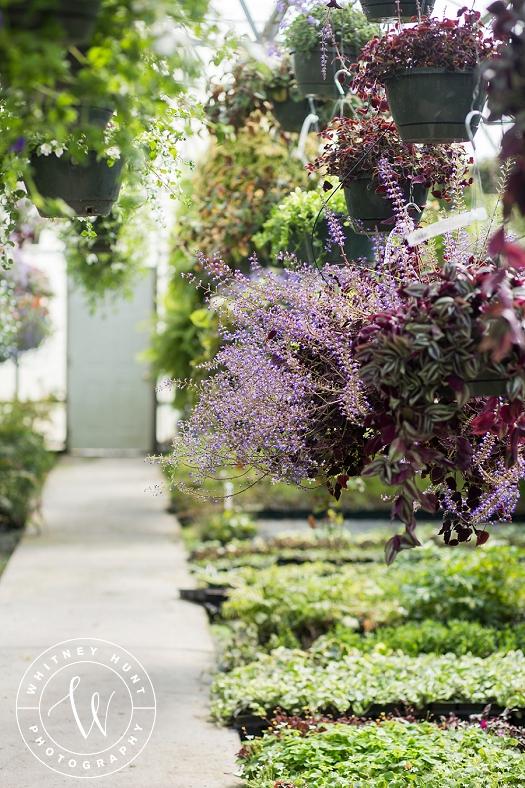 utah-greenhouse-engagement-photo_0011